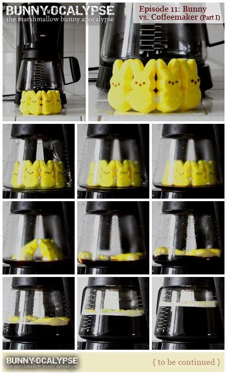 bunny vs coffeemaker 1