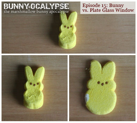 bunny vs window