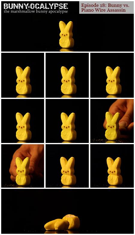 bunny vs assassin