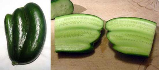cucucumber.jpg