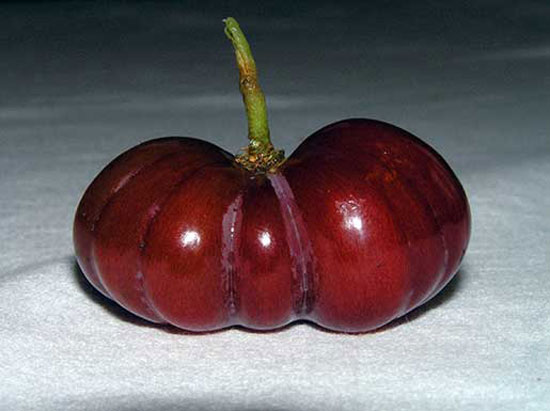 Grape Pumpkin
