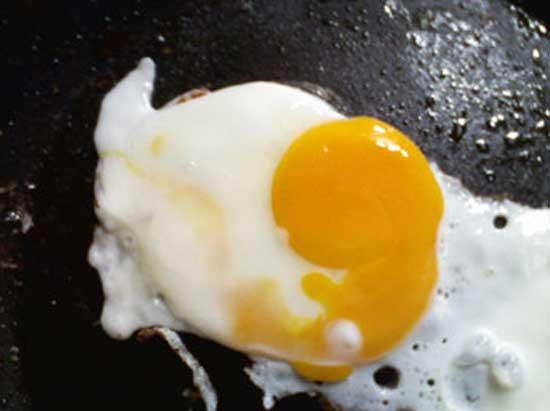 fetus egg