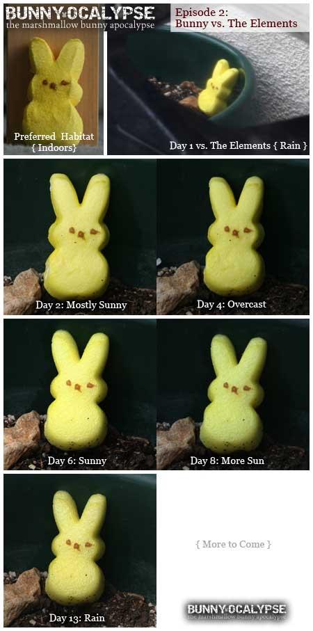 bunny vs elements