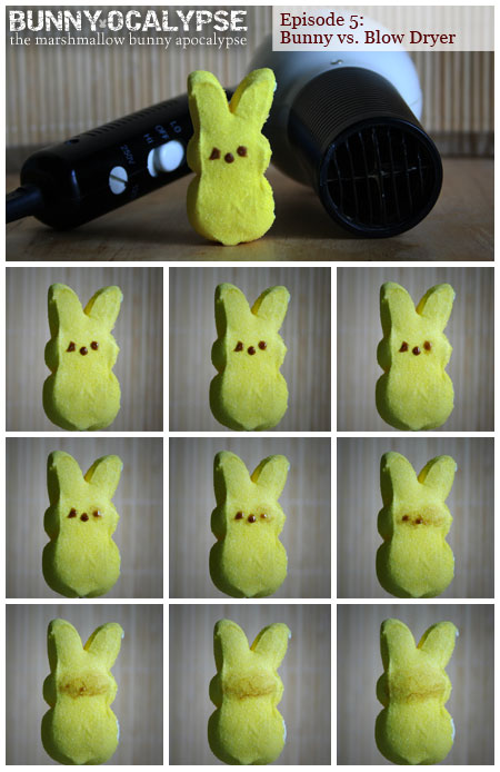 bunny vs blowdryer