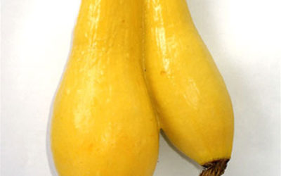 Conjoined Yellow Squash