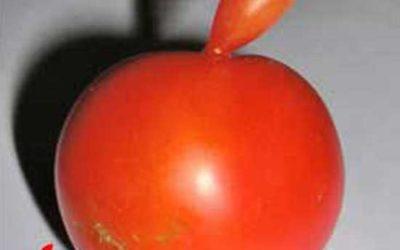 Tomato As Apple Logo