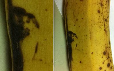 Banana… Jesus?