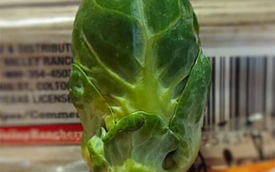 Brussels Sprout from the Black Lagoon