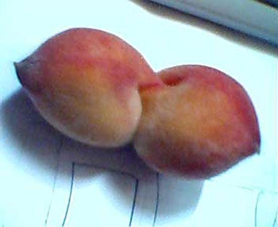 Conjoined Peach Pair