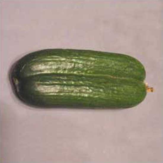 Conjoined Cucumbers