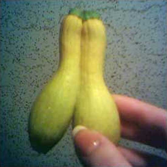 Conjoined Squash