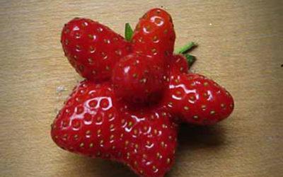 Craaaaaaazy Berry