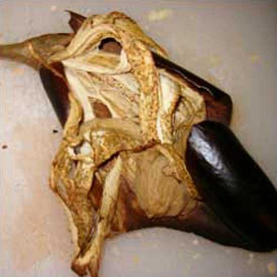 Eggplant Octopus