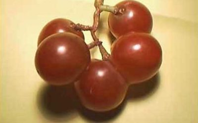 The Grapes of Much Wrath