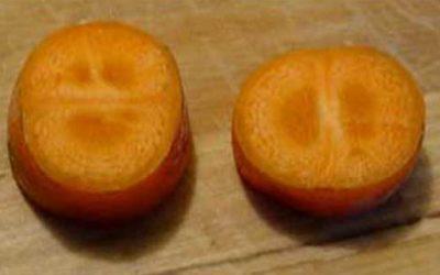 Anime Carrots