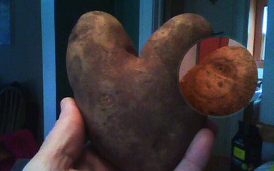 Heart Potato, Face Potato