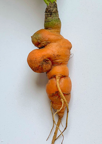Sad Olaf Carrot