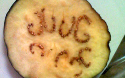 The Mysterious Message of 'JUUG'