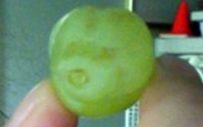 Grape Puppy
