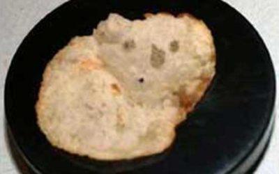 Koala Chip