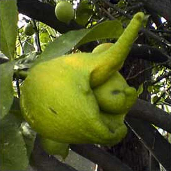 Mark of the Lime