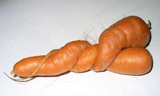 Loving Carrots #2