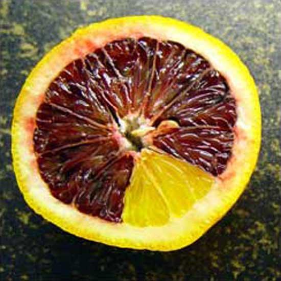 Orange-within-an-Orange #2