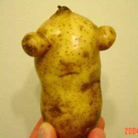 Bug-Eyed Potato
