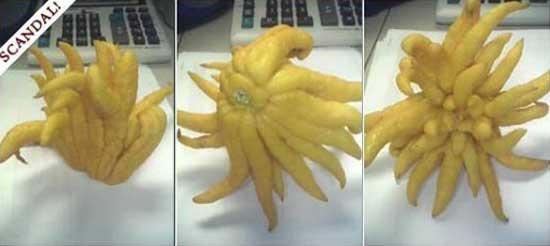 Scandalous Lemon
