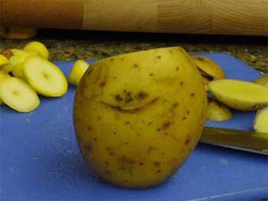Sly Potato