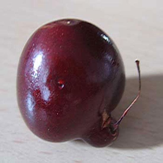 Strangely Strange Cherry