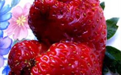 Strawberry Jaws