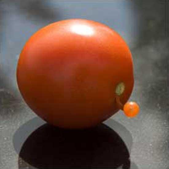 Tomato Eruption