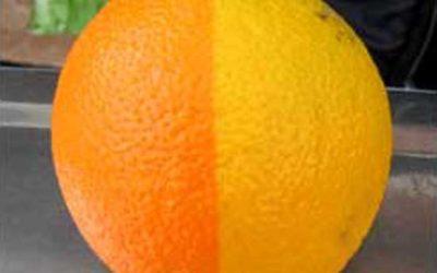 Two-Tone Citrus