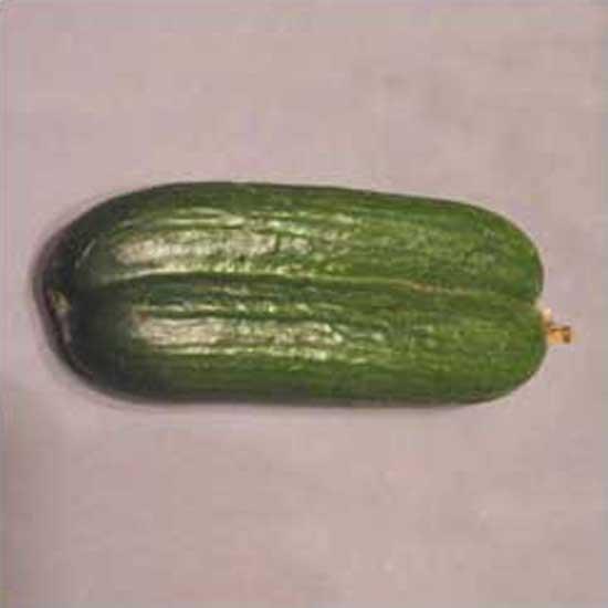 conjoinedcucumbers-mohamede.jpg