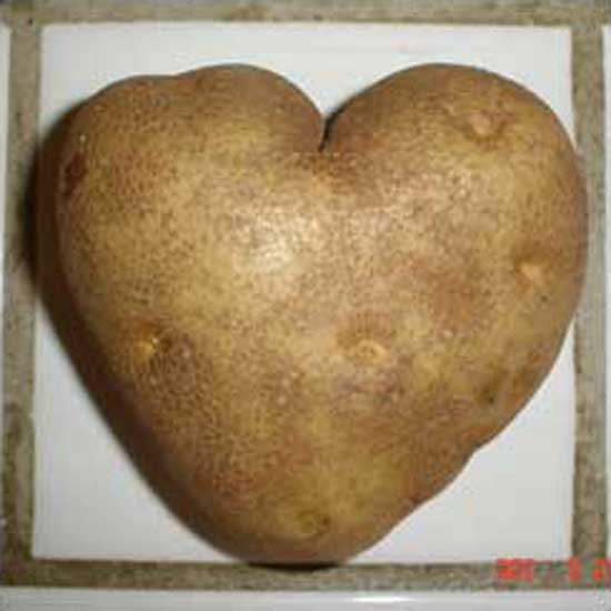 heartpotato-brad.jpg