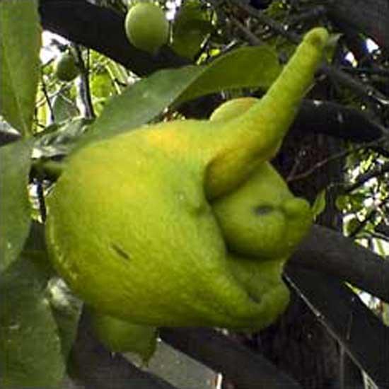limebeast-jamie.jpg