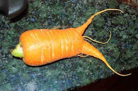 monster-carrot.jpg