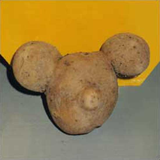 potato-mickey.jpg