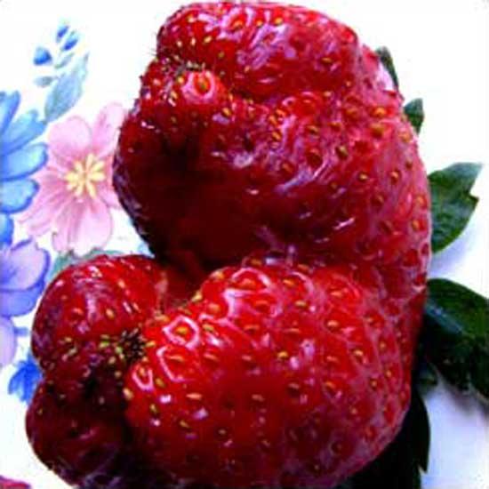 strawberry-jaws.jpg