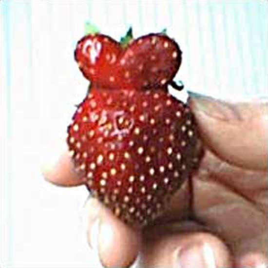 strawberry-queen.jpg