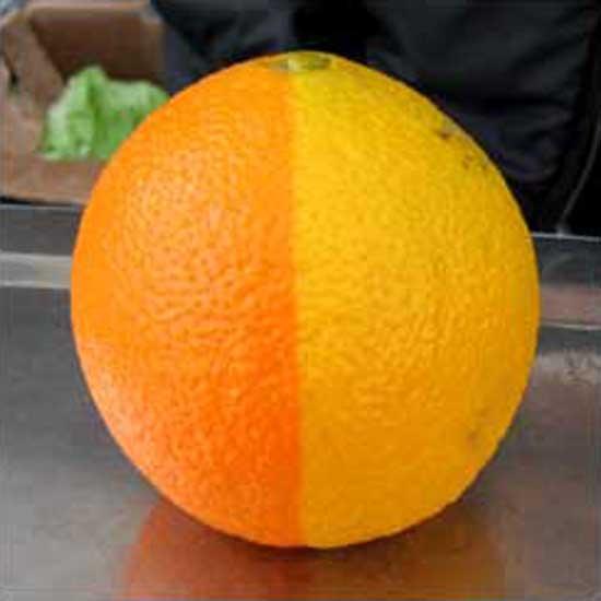 two-tone-citrus.jpg